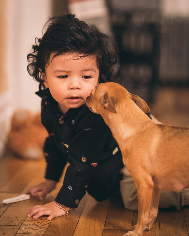 Dreng lærer at gå med sin hund