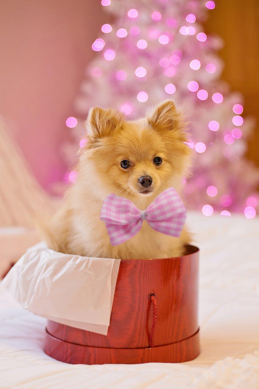 En hund som legetøj i gave